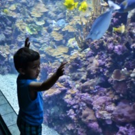Shishir gazes at the Aquarium