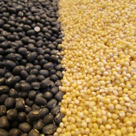Proso Millet and Urad